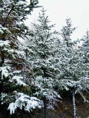 门头沟灵山飘雪游客惊喜 积雪已达2至3厘米