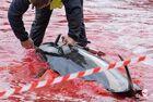 法罗群岛集体捕杀鲸鱼