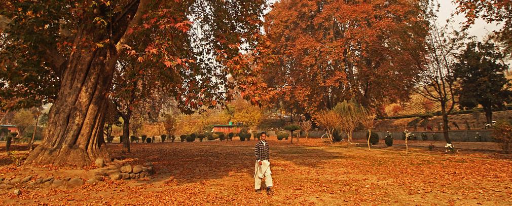 这里的秋天根本就是油画