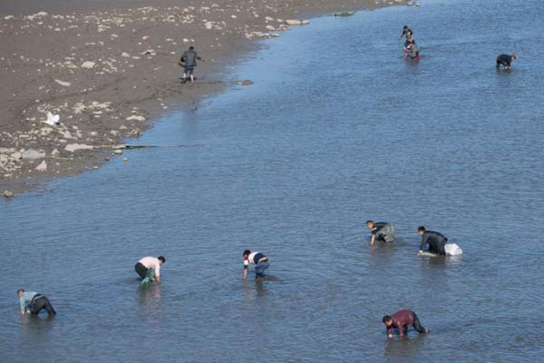 河道开闸放水 民众淤泥里上演抢鱼大战