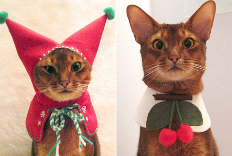 纽约设计师为宠物猫咪设计时尚装扮