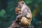 记录动物母子动人瞬间