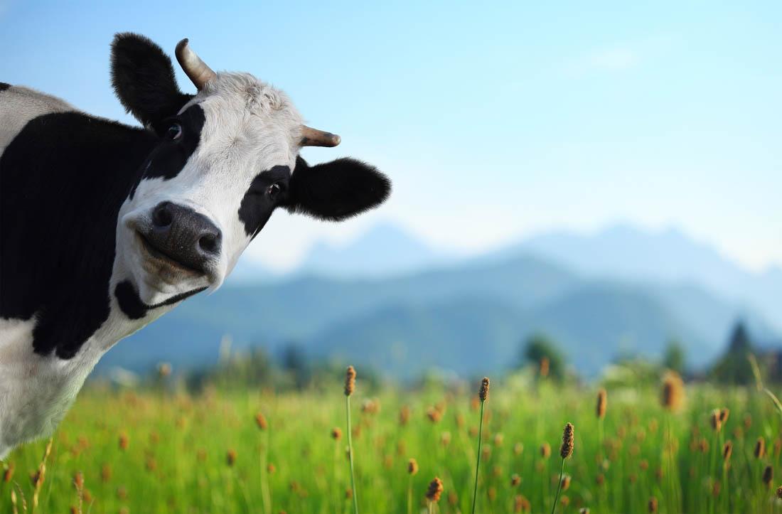 庄园牧场:西北乳业大王,欲借IPO打造成全国一流企业