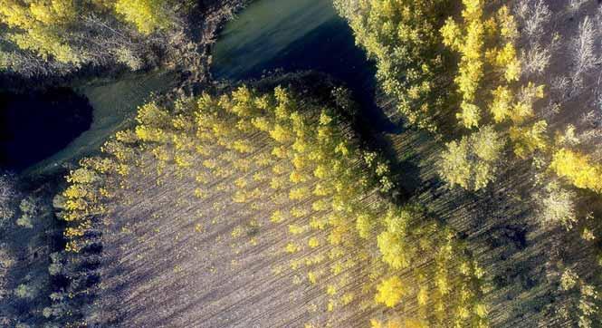 天津水库湿地防护林泛黄凋落 美景如画