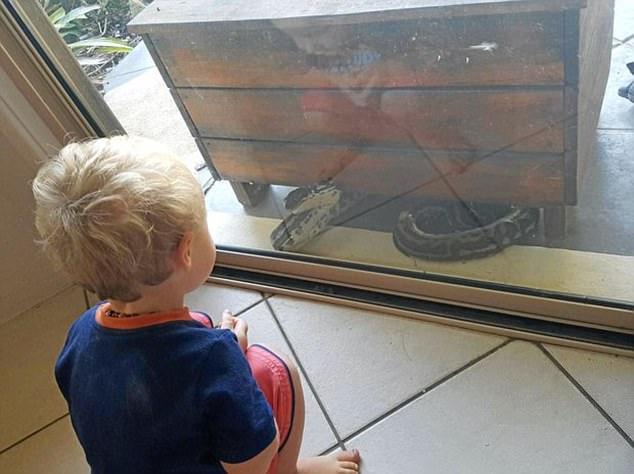 澳母亲家中发现巨蛇隔着玻璃窗向儿子发起进攻