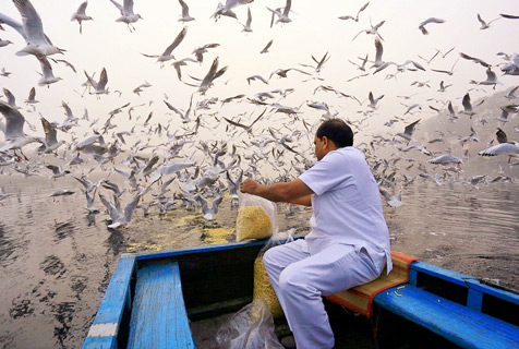 印度河岸鸟群过境 密密麻麻场面壮观