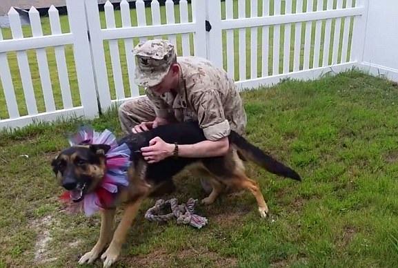 美士兵休假回家获爱犬大老远热情迎接