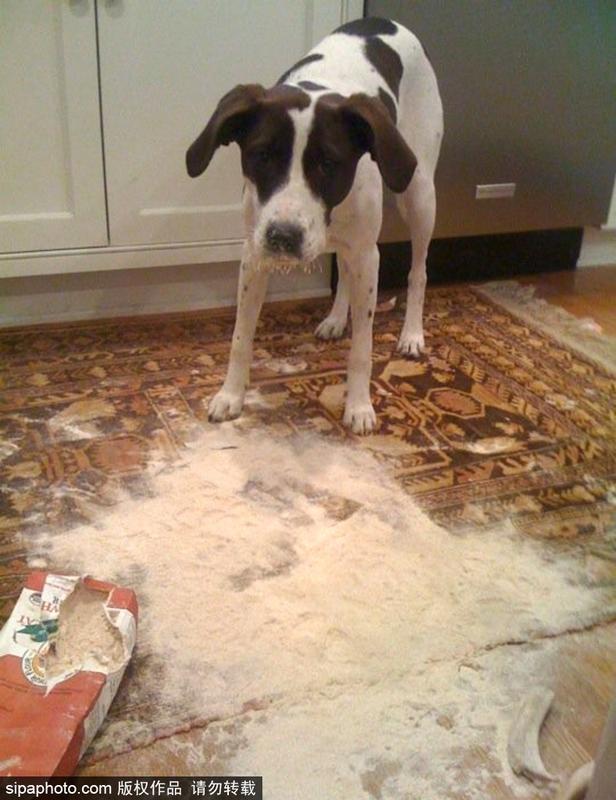宠物破坏大法!主人内心是崩溃的图片