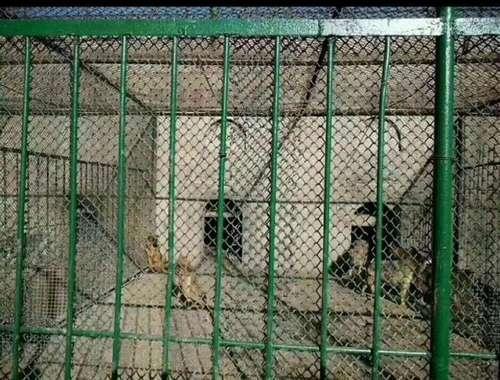 八达岭野生动物园将流浪狗喂老虎?园方回应:没有的事