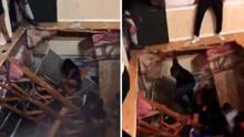 美大学公寓举行派对时地板坍塌致数十人跌落