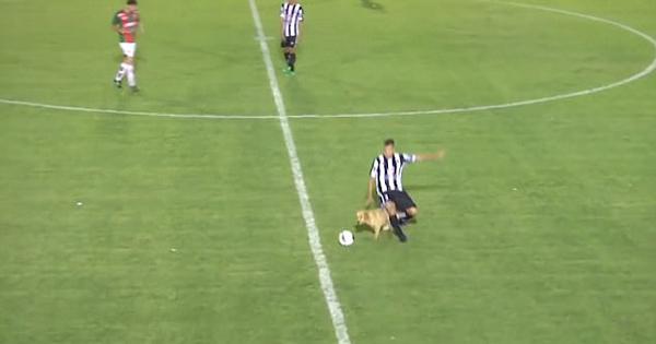阿根廷球赛上演滑稽一幕:狗狗从球员脚下抢球