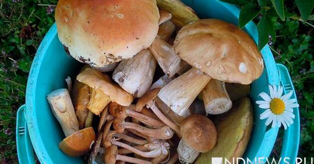 美专家:常吃白蘑菇 营养健康抗衰老