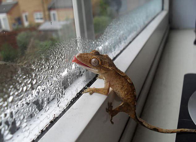爱上玻璃窗之后……图片