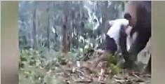 印度男效仿电影主角登象鼻 被大象甩飞当场晕倒