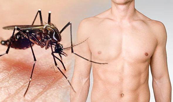 外媒:美国释放百万超级蚊子 或致人类男性不育
