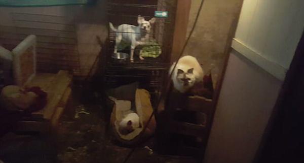 美动物协会从居民家救出近50只动物 部分患病