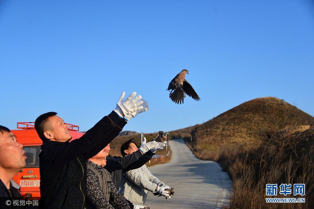 郑州:80多只野生动物伤好病愈 被放归大自然