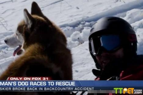 雪友滑雪意外跌落山谷 忠犬求援救主一命