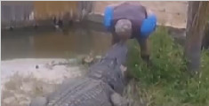 男子亲吻鳄鱼遭突然咬下