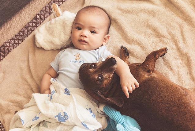 迷你腊肠犬陪伴宝宝成长 画面温馨