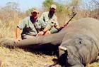 南非圈养动物供猎手杀戮