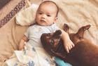 迷你腊肠犬陪伴宝宝成长