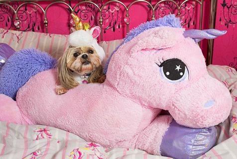 英女子花9万给爱犬置衣橱 宠成小公主
