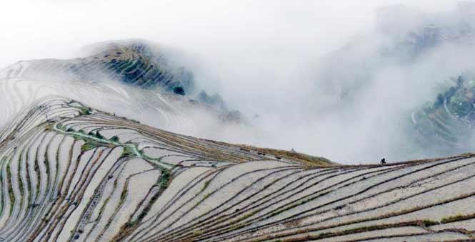 广西龙脊梯田云雾缭绕美如画