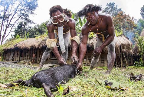 探秘印尼达尼部落:女人断指为丈夫陪葬
