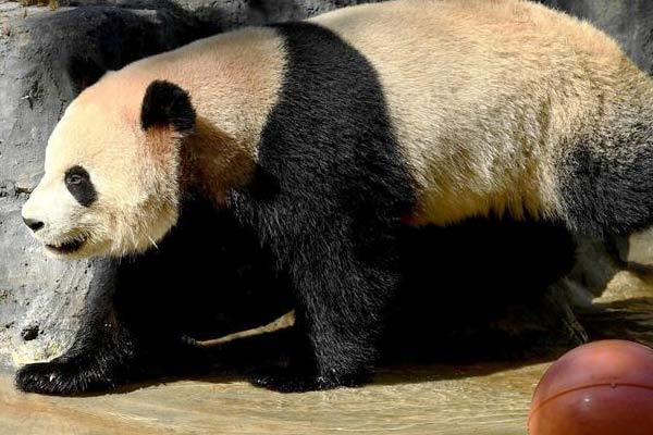"""云南野生动物园里的动物""""明星"""""""
