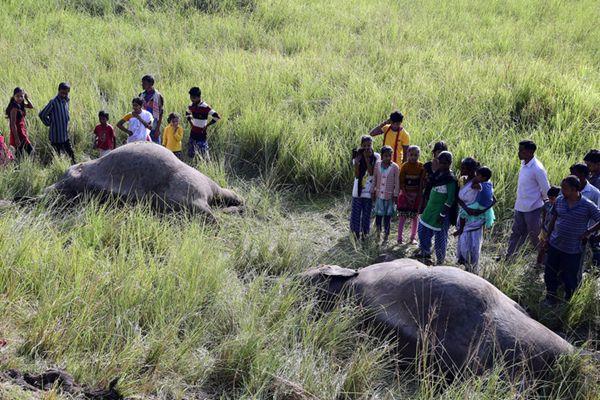 印度两头野象不幸被高速列车撞到身亡
