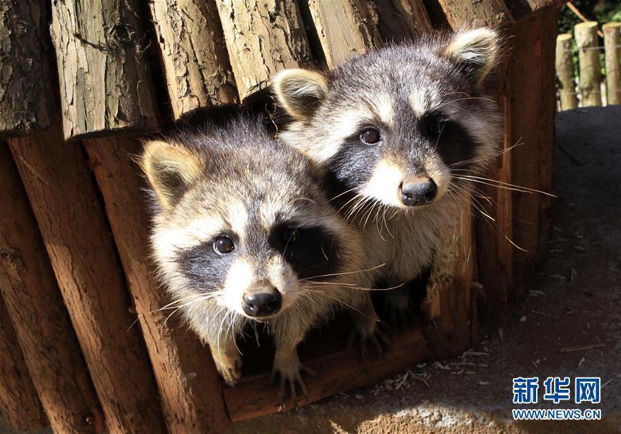 """这些可爱的动物""""明星""""时而嬉戏打闹,时而悠闲漫步,为人们增添了观赏的"""