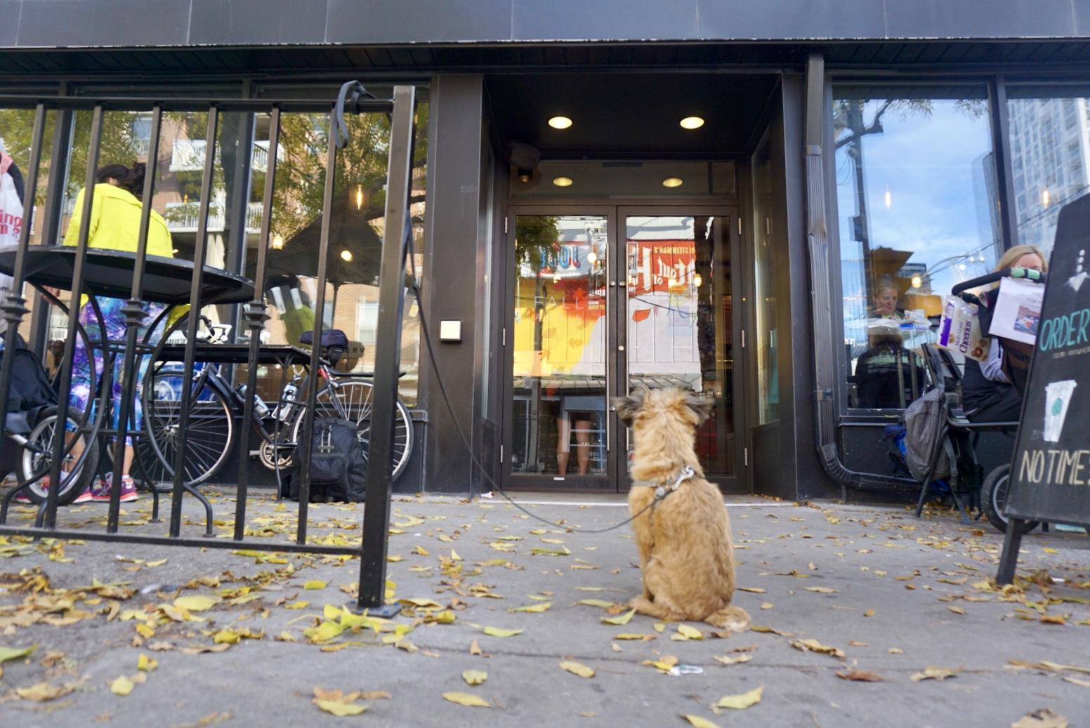 口碑新功能:一键查询能知哪些商家允许宠物进店