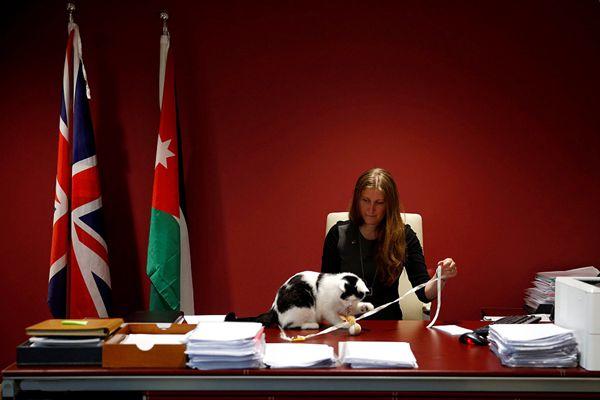 """英国这只猫见过大世面 出国当""""大使"""""""
