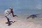 澳男子用鱼饵引诱咸水鳄