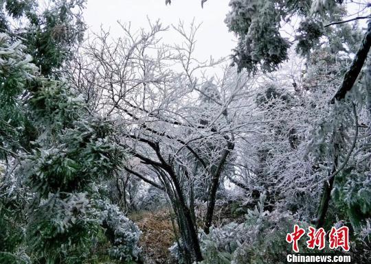 湖南南岳衡山景区迎今冬首场雾凇 美景宛如幻境