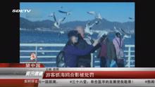 游客抓海鸥合影被处罚