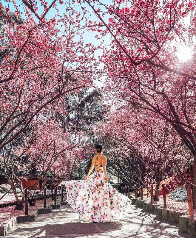 澳洲女大学生环游世界 拍下精美照片圈粉无数