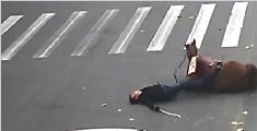 男子骑马闯红灯被撞 马没事人却受伤倒地