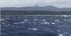 巨大座头鲸贴船跃出水面