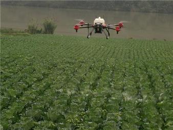 重庆潼南区上和镇植保无人机飞防助农业生产丰收