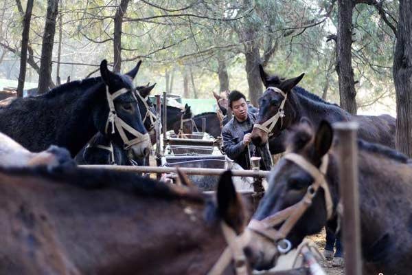 山东现马帮施工队 工人每月能挣一万