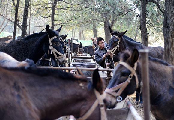 山东现马帮施工队 工人每月收入一万