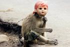 印尼长尾猴街头心酸卖艺