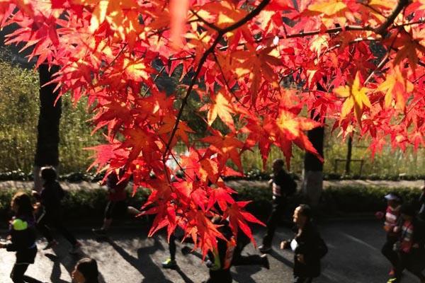 两千登山爱好者齐聚南京栖霞山 赏红枫看风景