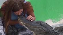 美国大胆女子与鳄鱼亲吻嬉戏 每天上演搏斗秀