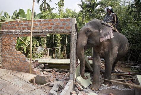 """印度警方""""雇用""""大象拆迁非法居住区"""