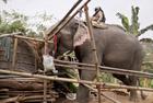 印度大象拆迁非法居住区