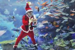 """""""圣诞老人""""现身日本水族馆喂鱼食"""