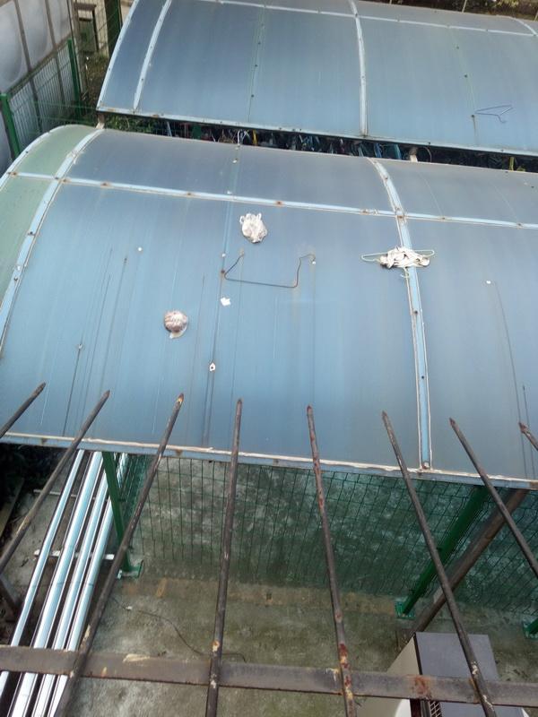 """上海一高校女寝阳台遭粪便""""空袭"""",保卫处:将联合宿管排查"""